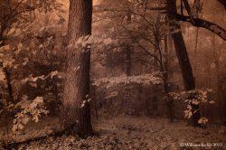 oak-among-brethern-mrgclrproconlvlsconpbrtmdesatrd48-dscf9549cpyrt-2