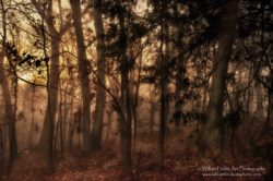 old-autumn-in-the-misty-morn-mrglvlsconpbrtpmrglvls-dsc_4018cpyrt