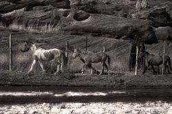 Dineh Ponies