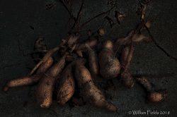 sweet-potato-pi-mrgclrproconbrlwrmglmglwlvlsconpbrtpfltpstedge-dsc_4148cpyrt